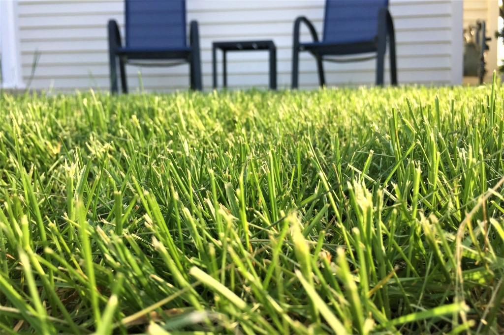 Image through the green grass in front of my porch, where two blue chairs sit with a small table between