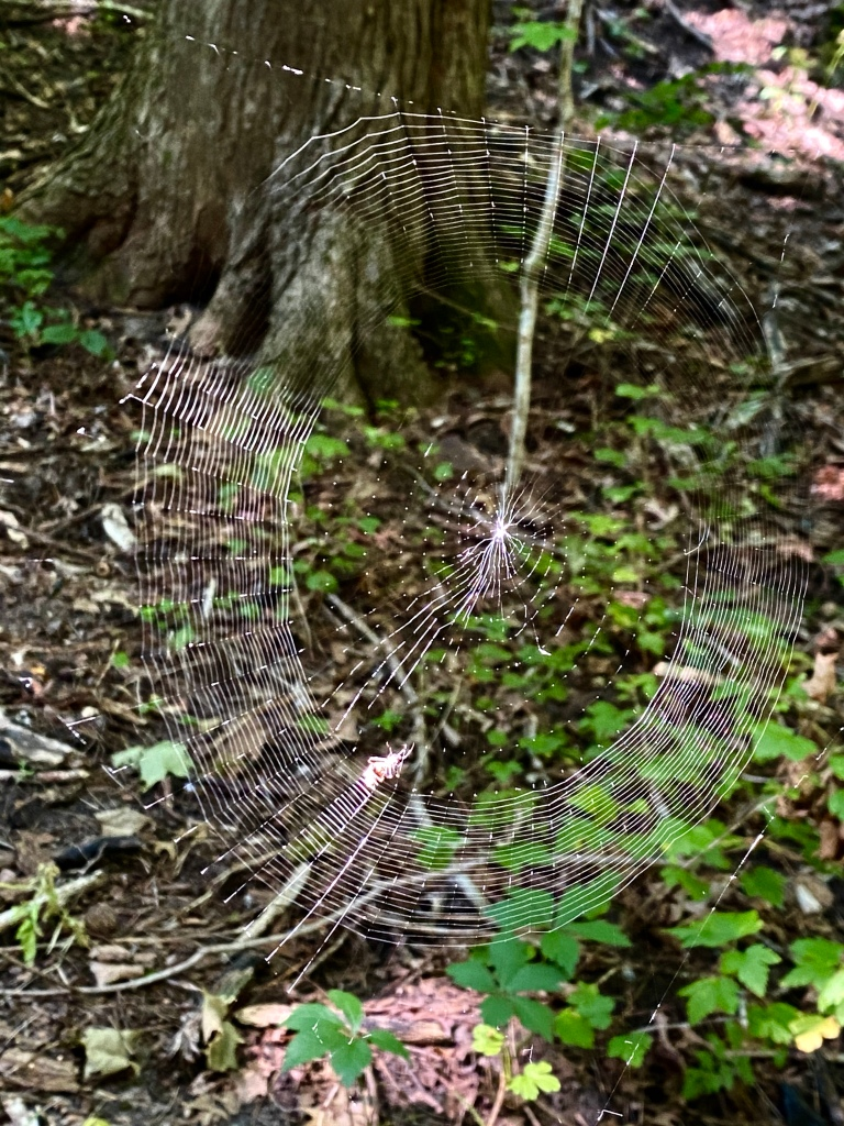 Spider web and small spider on a hiking trail